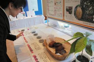 カカオの木や実、カカオマスなどチョコレートの製造過程を紹介する展示=氷見市海浜植物園で