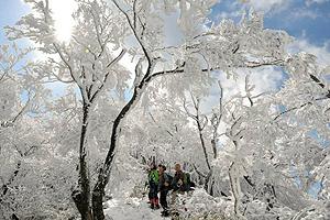霧氷に覆われ、幻想的な景色を見せる山頂付近=日野町の綿向山で