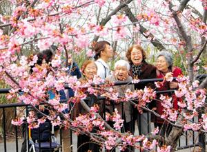 花見を楽しむお年寄りのグループ=大府市横根町の二ツ池公園で
