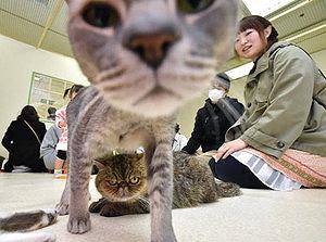 さまざまなネコに触れられる「ふれあいねこ展」=金沢市の大和香林坊店で
