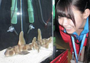 ネコザメなど犬や猫にちなんだ生物が展示されている会場=鳥羽市の鳥羽水族館で