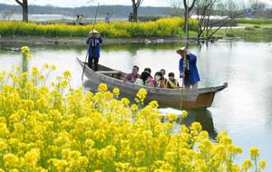 菜の花が咲く水辺を進む木舟=各務原市川島笠田町の河川環境楽園で