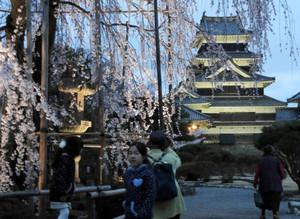 ライトアップされたサクラを眺める観光客ら=松本市の国宝松本城で
