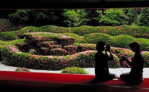 木々の緑と美しいコントラストを描くサツキ=甲賀市水口町の大池寺で
