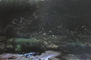 月明かりの下、大日川で舞い飛ぶゲンジボタル(多重露光)