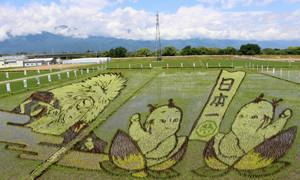 田んぼに浮かび上がった「田んぼアート」。展望台から見ることができる=松本市で