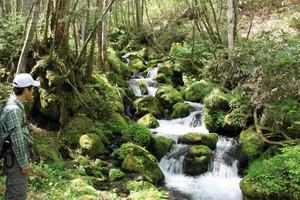 コケに覆われた石を縫うように流れ落ちる谷川の流れ