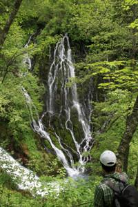 白糸のように流れ落ちる落差40メートルある布引滝(右)=いずれも岐阜県高山市丹生川町で