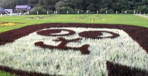 古代米の葉で色分けされた田んぼアート=岡崎市藤川町で