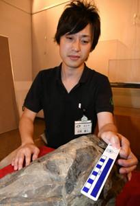 初公開される岩の表面に露出した化石。大きさや内部構造から恐竜の骨とみられる=石川県白山市桑島の白山恐竜パーク白峰で