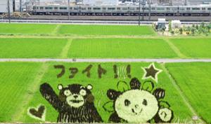 熊本地震の被災地を応援するあさぴーとくまモンの田んぼアート=尾張旭市城前町で