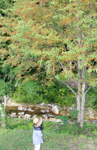 赤い実をつけたウワミズザクラ=高山市清見町の彦谷の里で