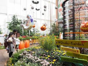 ハロウィーンの演出とキクを中心にした花壇を楽しむ親子連れ=砺波市中村で