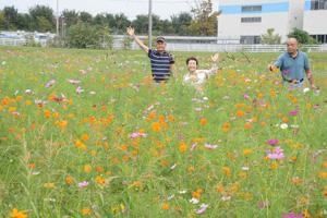 コスモスの世話を続ける区長の兵藤さん(左)、杉浦さん(右)=豊田市千足町で