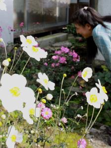 境内のあちこちに咲く白やピンクのシュウメイギク=伊賀市富永の新大仏寺で