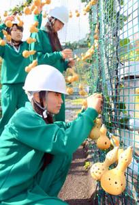 不動橋に電飾用のヒョウタンを取り付ける生徒たち=養老町の養老公園で