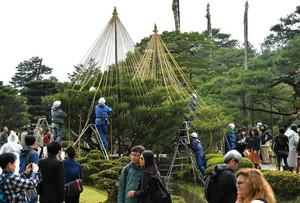 作業が始まった冬の風物詩「雪つり」=金沢市の兼六園で