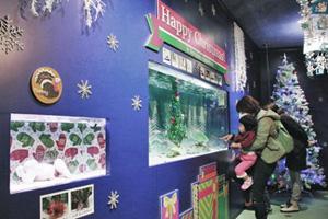 クリスマスにちなんだ生き物が展示されている会場=石川県七尾市ののとじま水族館で