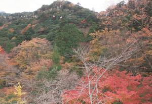 紅葉が最終盤を迎え、冬の装いを整え始める御在所岳=菰野町で