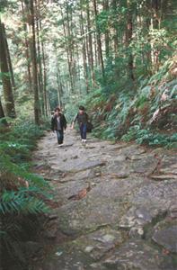 馬越峠に続く石畳の熊野古道伊勢路を歩く大学生の2人=三重県紀北町で