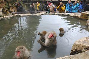 温泉に入るニホンザルにカメラを向ける外国人観光客ら。展示室には英語の解説文も=山ノ内町平穏の地獄谷野猿公苑で