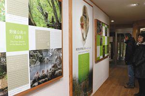 管理事務所内に設置されたニホンザルの生態などを紹介するパネル=山ノ内町平穏の地獄谷野猿公苑で