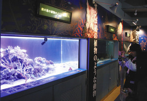 見た目や生態に特徴がある生き物が並ぶ会場=七尾市ののとじま水族館で