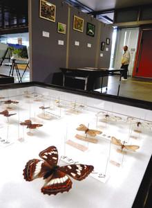ミヤマシジミ研究会が展示していチョウの標本や写真=伊那市役所で