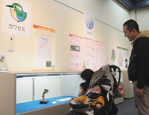 学芸員と市民が協力して調べた富山市内全域の動植物分布を紹介する企画展=富山市科学博物館で