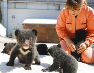 初めて日なたぼっこをするクマの赤ちゃんたち=高山市奥飛騨温泉郷一重ケ根の奥飛騨クマ牧場で