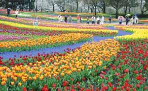 園内を彩る色とりどりのチューリップ=海津市海津町油島で