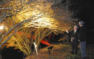 ライトアップされた開花前のミツバツツジ=駒ケ根市で
