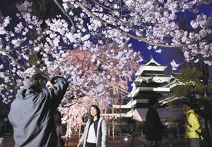 ライトアップで浮かび上がる桜と国宝松本城=松本市で