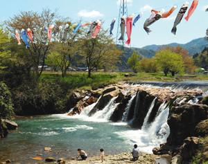 風に揺られて泳ぐこいのぼり=小松市布橋町で