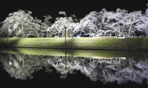 水面に幻想的に映し出された夜桜=飛騨市古川町杉崎で
