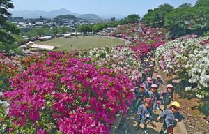 目の前に広がる、色鮮やかなツツジを楽しむ園児たち=鯖江市の西山公園で