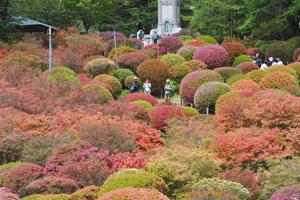 色とりどりのツツジが咲く園内=岡谷市の鶴峯公園で