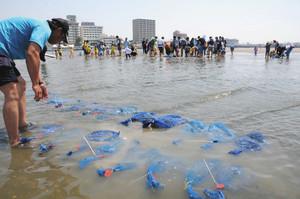 アサリを育てるため、浅瀬に設置される砂利入りの網袋=浜松市西区舞阪町弁天島で