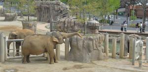 広くなり、より自然に近い状態でアジアゾウが見られる「ゾージアム」=名古屋市千種区の東山動植物園で