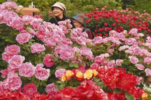 色とりどりのバラが咲き誇る「春のバラまつり」=可児市の花フェスタ記念公園で