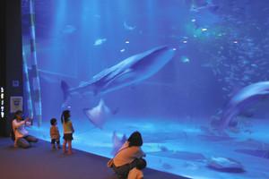 大型水槽を悠然と泳ぐジンベエザメ(中央)=いずれも石川県七尾市で