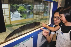 胴体や尾ひれが刀のように形に見えるナマズ=名古屋市港区の名古屋港水族館で