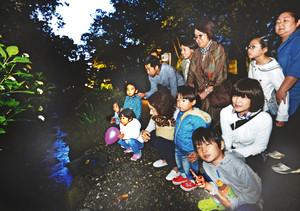 目を凝らしホタルの淡い輝きを探す人たち=金沢市の白鳥路で