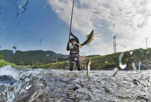 水しぶきを上げながらアユを釣り上げる中川さん=福井市高田町の足羽川高田橋上流で