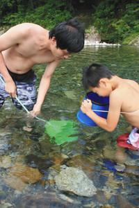 魚捕りに夢中の親子=いずれも三重県紀北町で