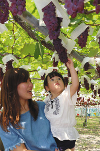 ブドウ狩りを楽しむ親子連れ=愛知県岡崎市駒立町で