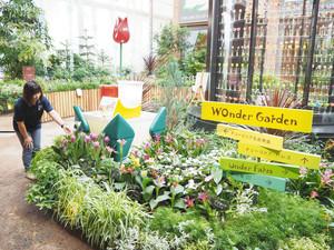 熱帯の花々とチューリップが楽しめる季節展示=富山県砺波市中村で