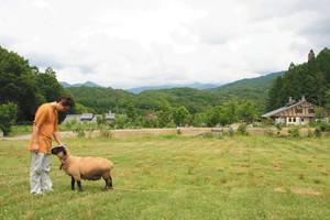 山之村牧場では散策しながらヒツジとふれあうこともできる=いずれも岐阜県飛騨市で