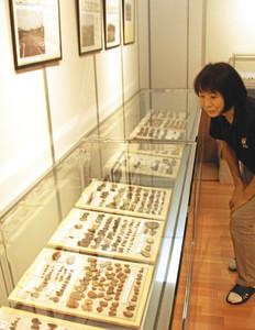上石津町内で発見された石器などが並ぶ会場=大垣市上石津郷土資料館で