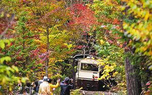 紅葉の中をゆっくりと進むトロッコ列車=上松町の赤沢自然休養林で